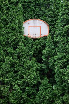 Love this basketball goal hidden in the trees