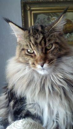 Xavier (Balou) of old Hurrikan's