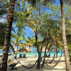 Coco Plum Island Resort is an adults only all inclusive resort located on a private island in Belize. Dotted with beach beds, lounge chairs, and swaying hammocks, it's the perfect place to cast your worries away. Belize All Inclusive, Adult Only All Inclusive, All Inclusive Honeymoon, Romantic Honeymoon, Plum Island, Beach Bedding, Island Resort, Hammocks, Adults Only