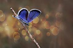 Butterfly effect - V by Necat ÇETİN, via 500px
