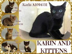 TO BE DESTROYED 10/29/16 ** MOM AND 5 KITTENS WHO ARE NURSING AND NOT EATING ON OWN YET NEED FOSTER. MANHATTAN CENTER  **MUST BE PULLED BY A NEW HOPE RESCUE** KARIN AND KITTENS – A1094731, A1094733, A1094736, A1094737, A1094740, A1094741  A1094731 – KARIN (NOT LISTED TONIGHT) FEMALE, BLACK, DOMESTIC SH MIX,1 yr STRAY – STRAY WAIT, NO HOLD Reason STRAY Intake condition EXAM REQ Intake Date 10/25/2016, From NY 10469, DueOut Date 10/28/2016, I came in with Group/Litter #K16-079299.