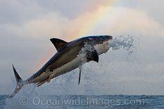 Shark - Google 検索