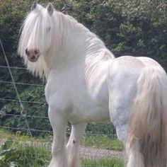 A white beauty!