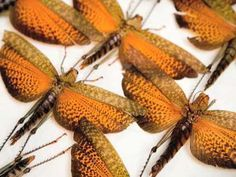 Newark Museum official - Insecta Fantasia: A Centennial Commission by Jennifer Angus