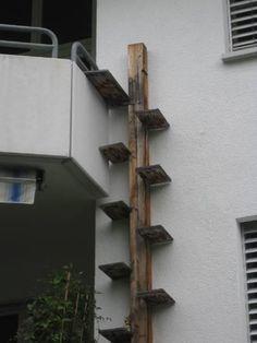 Cat walks, ladders and spaces on Pinterest | Cat Shelves, Cat Walk ...