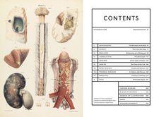 Amazon.fr - Le malade a augmenté la maladie et l'art de l'illustration médicale / anglais - Richard Barnett - Livres
