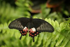 beautiful exotic butterfly pics | exotic butterfly | Flickr - Photo Sharing!