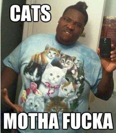 Cats! Motha fucka!