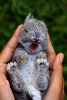 bunny rabbit. Cute Animals. www.livewildbefree.com Cruelty Free Lifestyle & Beauty Blog. Twitter & Instagram @livewild_befree