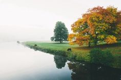animals, beauty, fall, photo, trees