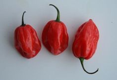 Chile Pepper Glossary   SAVEUR