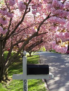 I'd like to plant a tree when we get our first house. Cherry tree would be perfect