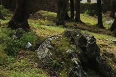 Canari, Corsica 2014