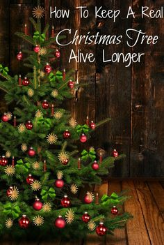 Wondering how to make a Christmas Tree last longer? Use these 8 ...