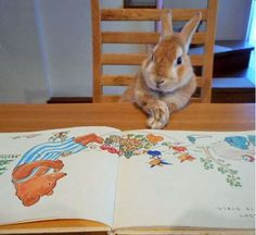 日本網友替兔星人買了小被窩後,發現兔星人有個「才華」,讓許多人類都感到汗顏啊! | PTT01