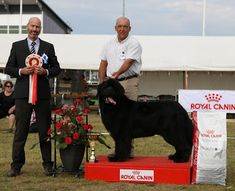 "MAIKUN KUKKA JA RISU: BEST IN SHOW...GOLDBEAR'S KENTUCY KLONDIKE..""AMADE..."