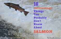 Who knew salmon those crazy little suckers could be so interesting?? | Kelley's Break Room, @kelleysbreakrm