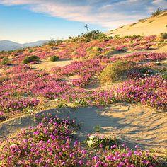 Anza-Borrego State Park, San Diego, CA