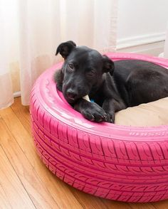 DIY pneus lit chien