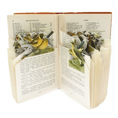 http://www.frankworks.eu/product/the-observers-book-of-british-birds/