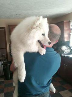 Bn Craigslist Pets Related Keywords & Suggestions - Bn Craigslist Pets ...