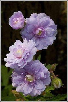 (27) Najljepše Cvijeće • Beautiful Flowers