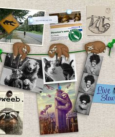 Sloths on a Vine Picture Clip - Set of Six