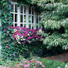 Контейнерные сады
