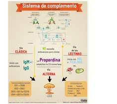 Temas selectos de Inmunología. Sistema de complemento