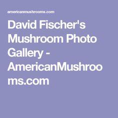 David Fischer's Mushroom Photo Gallery - AmericanMushrooms.com
