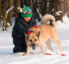 7 ways to make sure that visiting children and household pets interact safely and happily.
