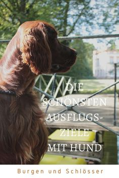 Destination - Castle Schönbusch with dog experience - Hunde Wissen - Katzen Outdoor Reisen, Dog Photography, Train Travel, Beautiful Dogs, Dog Training, Your Dog, Castle, Animals, Dog Things