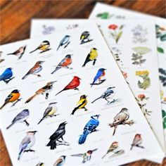 nature identification cards  perfect for travel & the outdoor bag