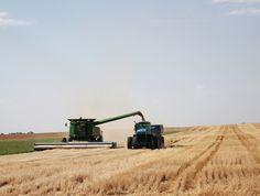 Harvesting wheat in western Kansas (June 25, 2013).