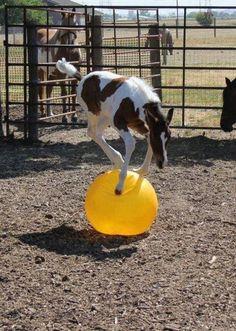 Upsee Daisy?: Careful little foal!