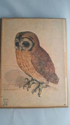 """1926 Vintage TODHUNTER BIRDS /""""TOWHEE/"""" STUNNING 90 YEARS OLD Color Art Lithograph"""