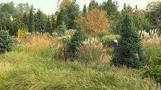 Maja w ogrodziehttp://www.majawogrodzie.tvn.pl/70,Dla-anglojezycznych-widzow---odcinek-521-Arboretum-Trojanow,maja-poleca.html