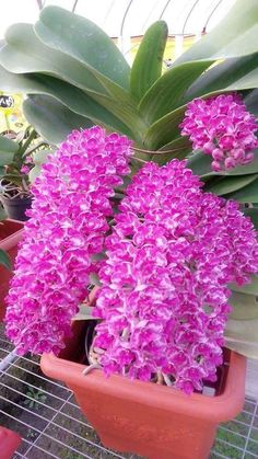You'll be astonished with all the Kinds Of Tropical Flowers as well as their uni. Unusual Flowers, Rare Flowers, Flowers Nature, Amazing Flowers, Pink Flowers, Beautiful Flowers, Tropical Flowers, Cactus Flower, Dendrobium Orchids