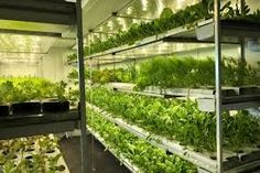 How analytics-based hydroponic farming can change lives in Africa | CIO Hydroponic Farming, Hydroponics System, Agriculture, Canning, Cloud Computing, Life, Insight, Africa, Change