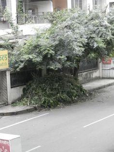 Tree cuttings on footpath- Shivatirth nagar, Paud road