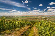 Columbia Valley | Vineyard | Wineries | Washington State Wine
