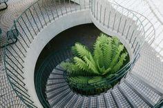istartedaphotoblog:  Staircase/fern