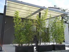 bambou en pot depuis 2 mois - Notre maison chany par fifi & nadou 50 sur ForumConstruire.com
