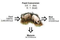 A REALLY great article about the complete cost of raising pigs