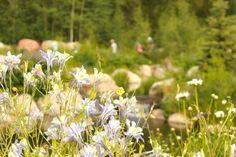 John Denver Sanctuary | Aspen CO Chamber