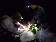 The food of frogs in a tropical forest - The Australian Museum Blog