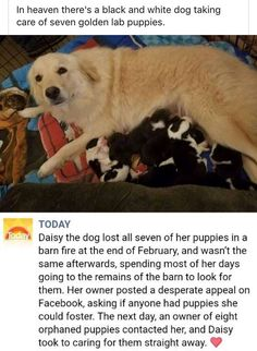 17 Wholesome Memes That Even Your Grandma Can Enjoy - AWW - - Were not crying youre crying. The post 17 Wholesome Memes That Even Your Grandma Can Enjoy appeared first on Gag Dad. Cute Funny Animals, Cute Baby Animals, Funny Cute, Animals And Pets, Black And White Dog, White Dogs, White Lab Puppies, 5 Anime, Cute Stories