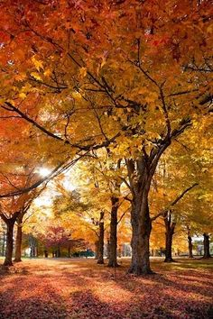 Autumn trees starts in late September in western Maryland and moves eastward reaching the Eastern shore...