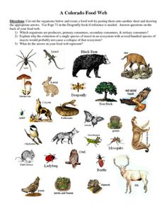 Grizzly Bear Food Chain Diagram food webs on pinterest food chains ...