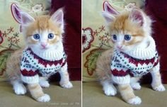 Cat Sweater Patterns | DIY Cozy Home and like OMG! get some yourself some pawtastic adorable cat apparel!